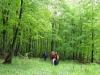 krása májového lesa